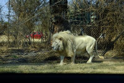 1408 lionpark03
