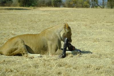1408 lionpark07