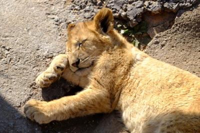 1408 lionpark08