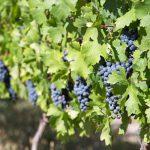 南アフリカの実力派ワイナリー スターク・コンデ・ワインズ